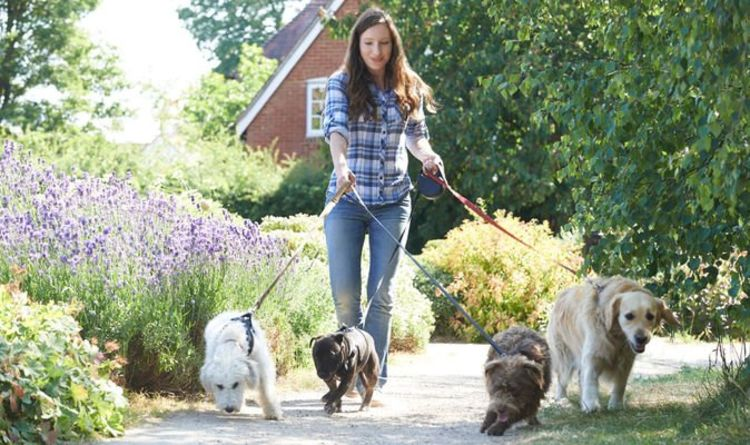 Eight out of ten dog owners admit they walk pets just for peace and quiet