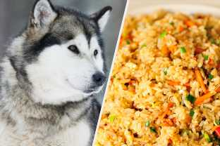 Eat A Ton Of Eggs And We'll Tell You What Kind Of Dog You Should Get