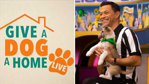 'Give A Dog A Home Live!' Animal Planet Unleashes Twice-Weekly Pet-Adoption Series