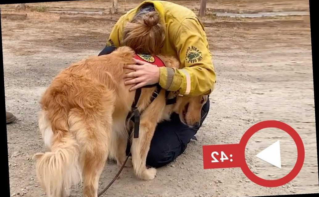 Golden retriever boosts morale for California wildfire first responders