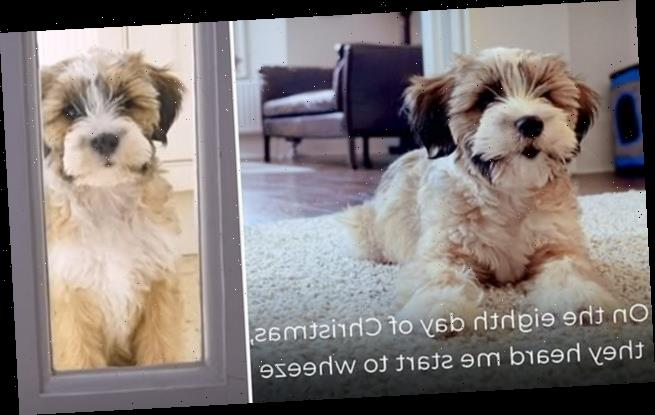 Government release video to warn pet-lovers about deceitful sellers