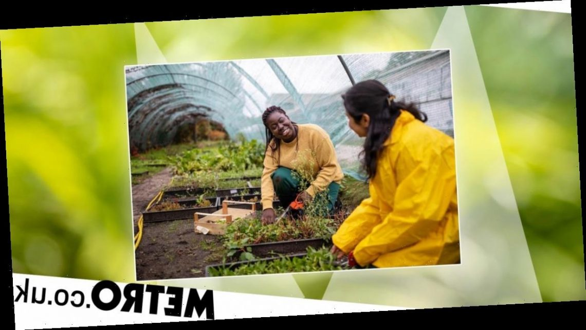 Allotments are good for your mental health, says research