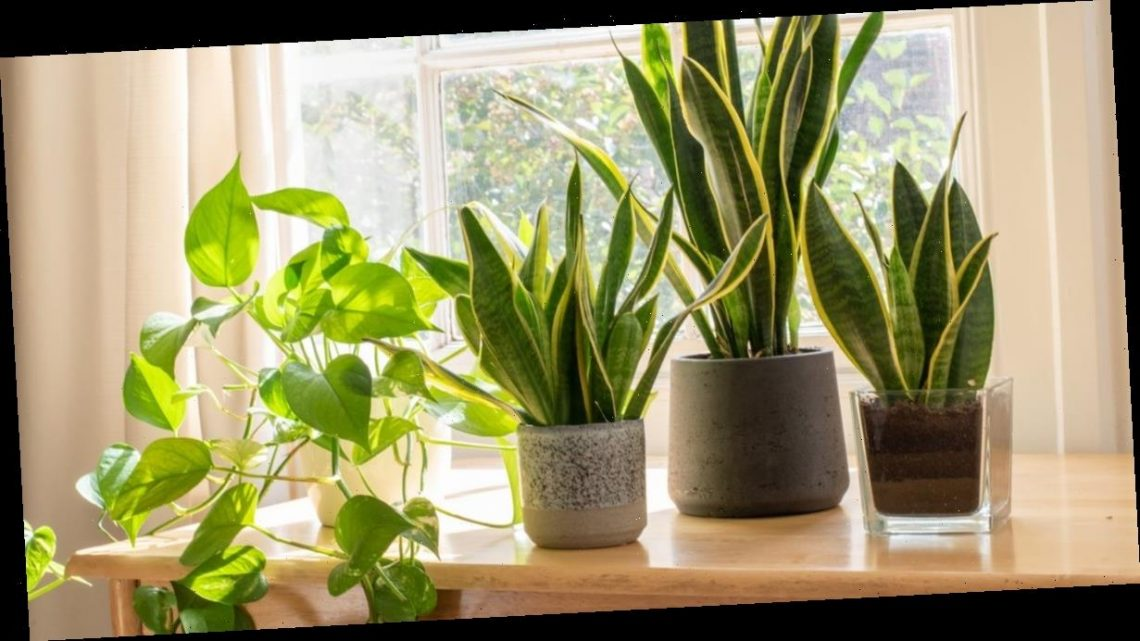 Lidl are selling a range of lovely houseplants with prices starting at £1.69 and fans are loving it