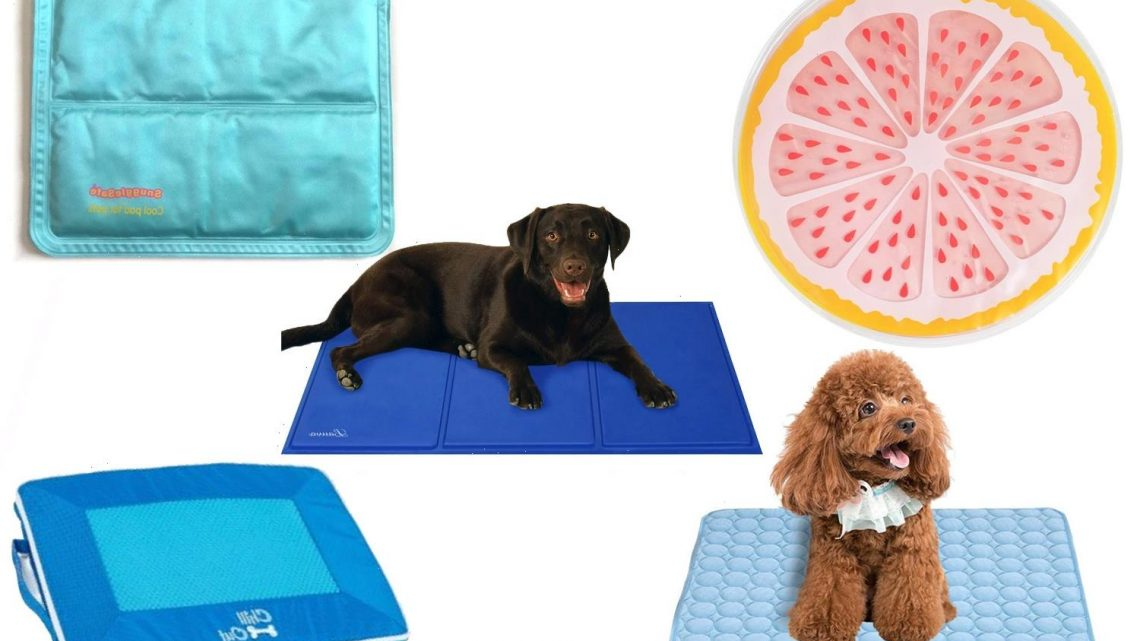 6 Best Pet Cooling Mats 2021 | The Sun UK
