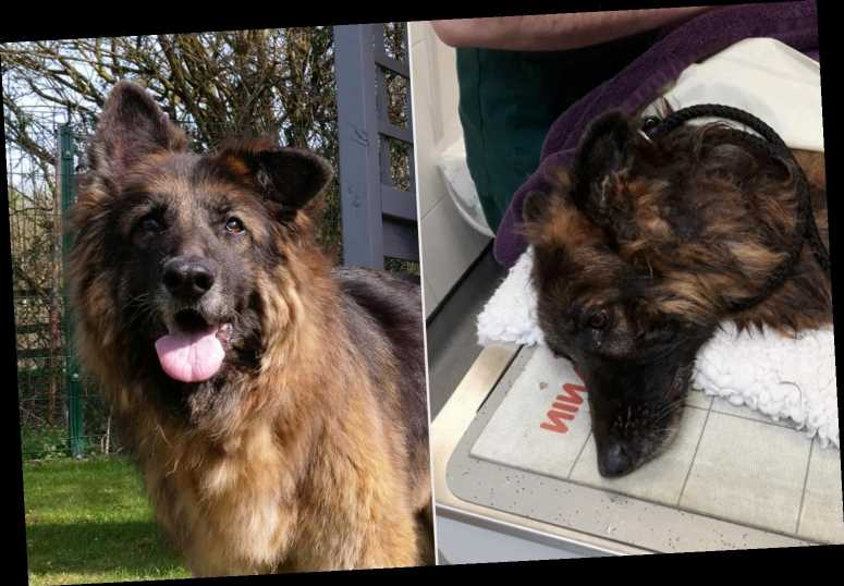 Dog Thrown in River with Rock Tied Around Her Neck Finds a Loving Home After 15-Month Recovery