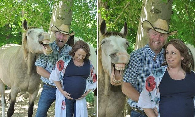 Horse steals the show during couple's pregnancy photoshoot