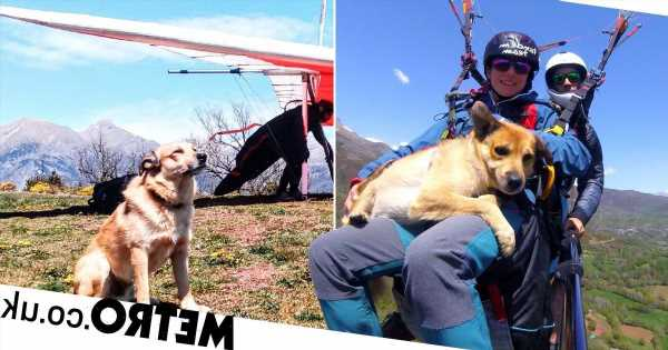 Daredevil dog paraglides 8,000 feet above the ground – strapped to his owners