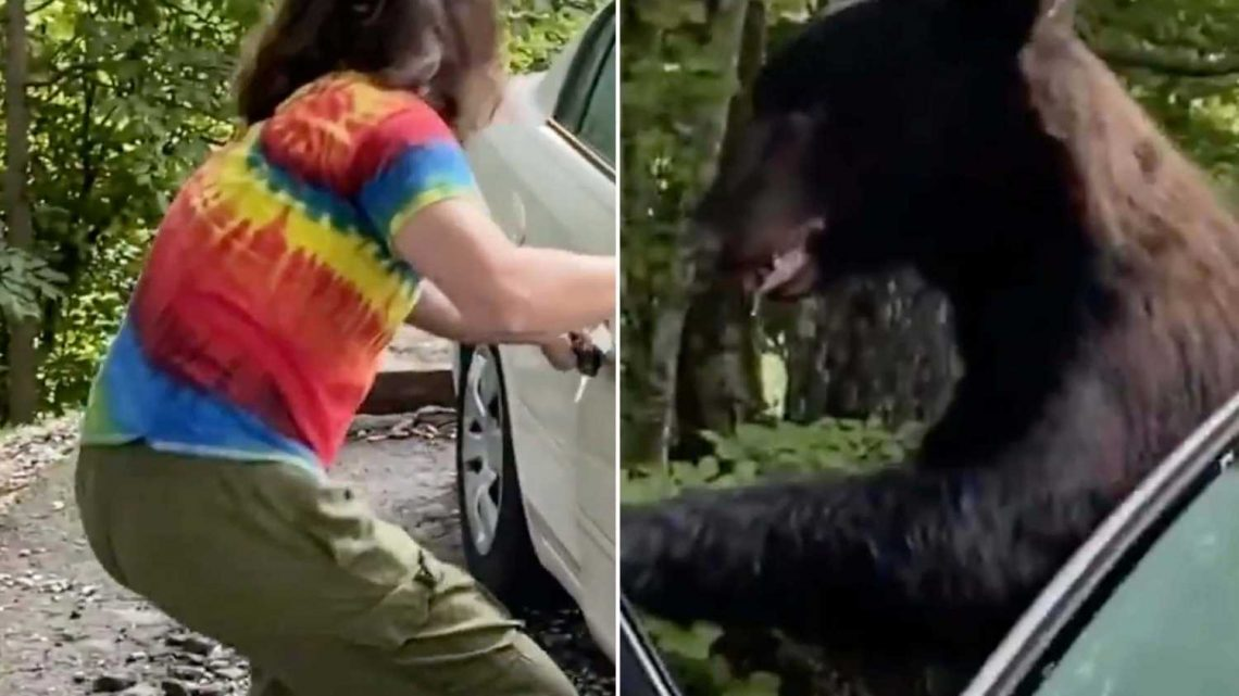 Viral TikTok video shows terrifying moment man lets bear out of his car