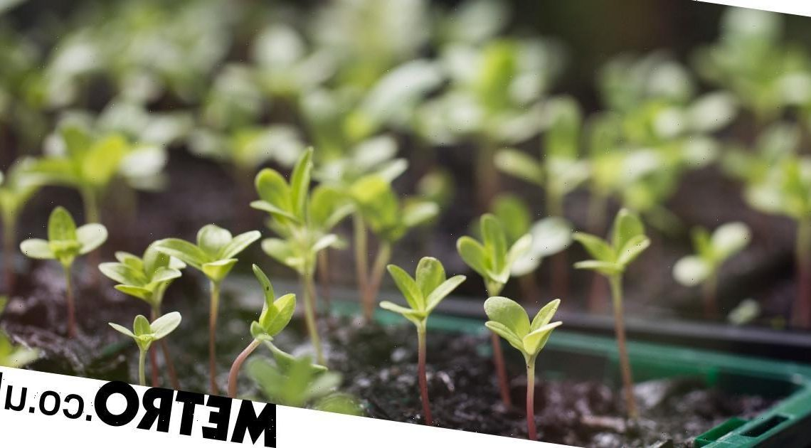 Your guide to growing your own fruit, vegetables and herbs from seed